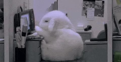 bunny-falls-asleep-at-desk