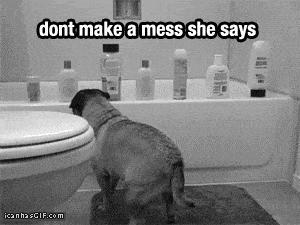 Rebel-Pug