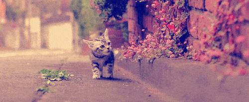 flores_gatos_sos_solteiros