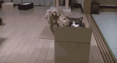 gato_sososlteiros
