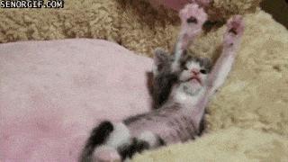 gato_sono_sos_solteiros
